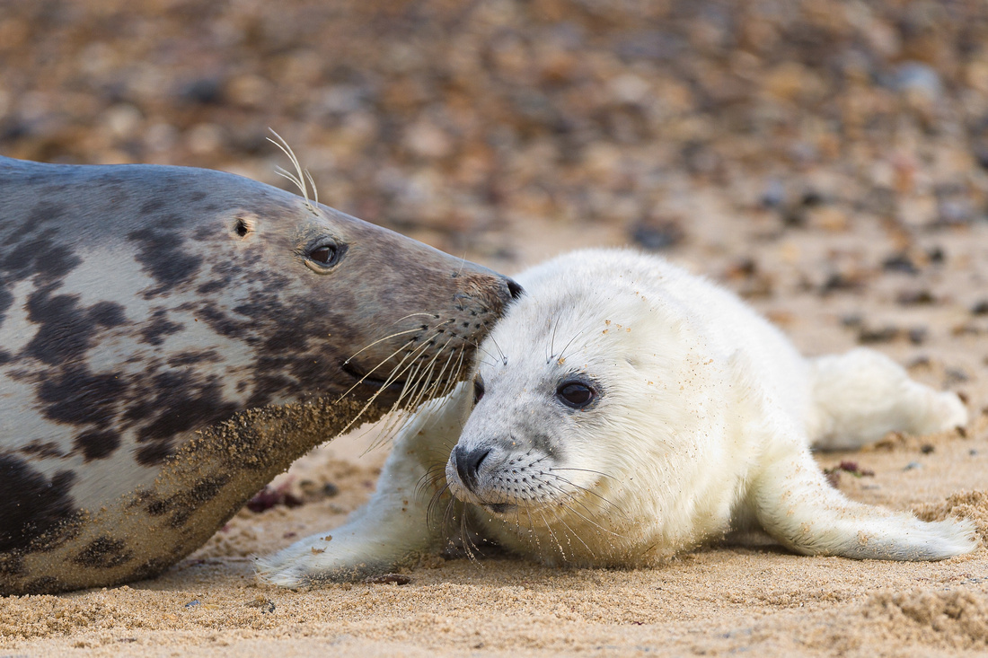 SEAL-ed with a kiss