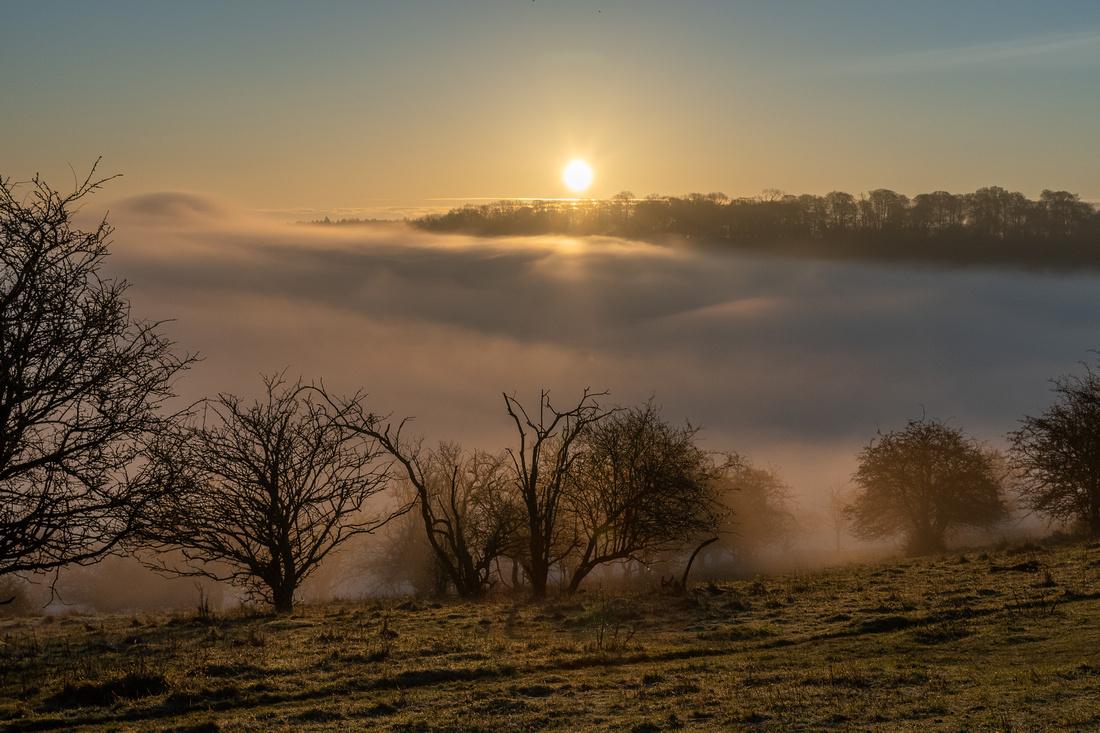 An Ashridge Sunrise